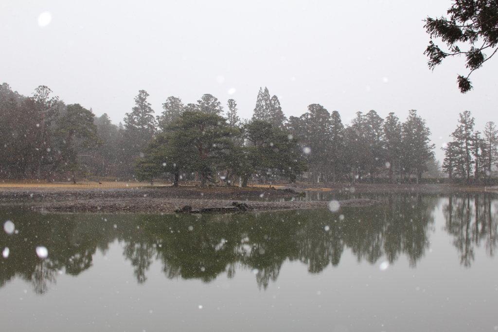 浄土庭園 大泉が池