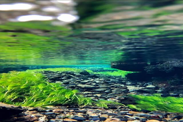 inside the river
