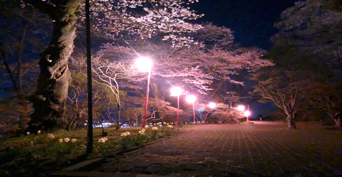 一関の夜景と夜桜を楽しめる! 一関「釣山公園」