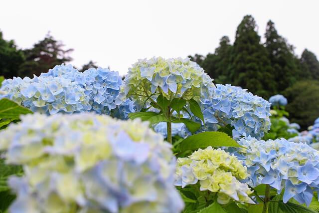 What is Akasaka Public Garden?
