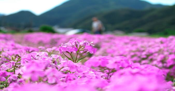 上有住の「ナデシコ園」とは?広がる光景はまるでピンクの絨毯を敷いたかのよう!