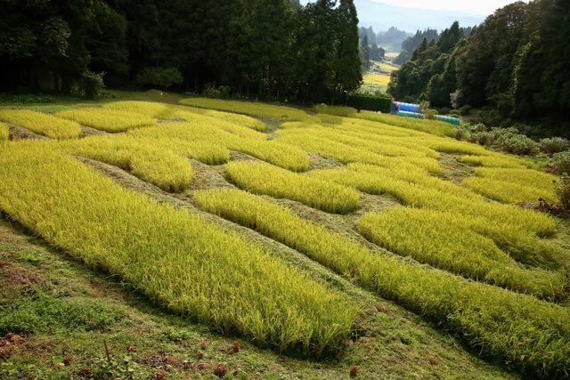 受け継がれた手作業で守られる日本の原風景!